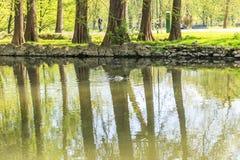 Patos que flotan en el río Fiume Lambro que pasa con el par Fotos de archivo libres de regalías