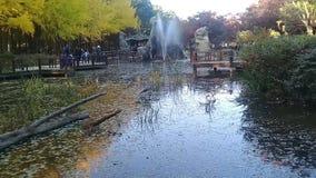 Patos salvajes que nadan en un lago con el paisaje precioso de las hojas coloridas del árbol