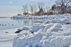 Patos silvestres en bahía congelada con reflexiones Imágenes de archivo libres de regalías