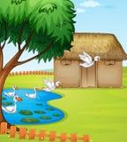 Patos, uma casa e uma paisagem bonita Imagem de Stock Royalty Free