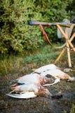 Patos y armas muertos de la caza Imagen de archivo