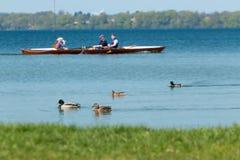 Patos y barco que compite con imagen de archivo libre de regalías
