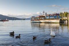 Patos y cisne en el lago WIndrmere con el barco de la travesía en la parte posterior Imagen de archivo libre de regalías