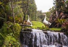 Patos y ganso cerca de una cascada y de árboles Fotografía de archivo libre de regalías