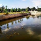 Patos y puente sobre el río Fotos de archivo libres de regalías