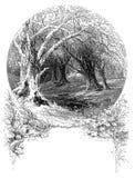 Patriarchal Tree Royalty Free Stock Image