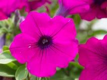 Patricia ogródu kwiat obraz stock