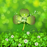 Patrick's Day Royalty Free Stock Images