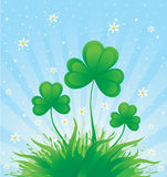 Patrick spring background with shamrock Royalty Free Stock Photo