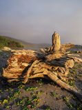 Patricks strand för punktKalifornien delstatspark Arkivbilder