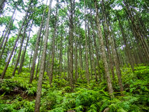 Patrimônio mundial Forest Kumano Kodo em Japão em maio imagens de stock royalty free