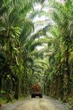 Patrimoine de palmier à huile Images libres de droits