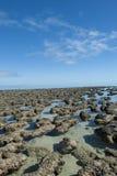 Patrimonio mundial Australia de Stromalotites Imagen de archivo