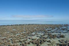 Patrimonio mundial Australia de Stromalotites Fotos de archivo libres de regalías