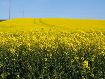 Patrington village and farm fields east yorkshire UK. Stock Image