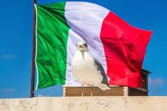 Patriote de mouette, derrière onduler le drapeau italien Mouette se tenant avec le drapeau de l'Italie sur le fond image stock