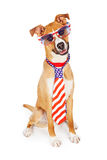 Patriotic American Dog Wearing Tie and Glasses. Funny patriotic dog wearing American flag necktie and sunglasses royalty free stock images