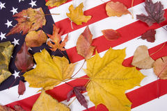 Patriotic Autumn Colors. Autumn leaves of all colors on the Red White and Blue American Flag Royalty Free Stock Photography