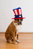 Patriotic Boxer Dog. Boxer dog sitting wearing a stars and stripes top hat royalty free stock photography