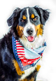 Patriotic Dog Stock Image