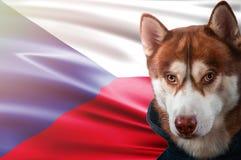 Patriotic dog proudly in front of Czech Republic flag. Portrait siberian husky in sweatshirt in the rays of bright sun. Patriotic dog proudly in front of Czech stock illustration