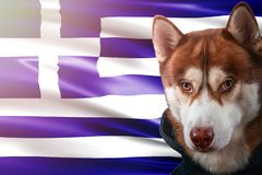 Patriotic dog proudly in front of Greece state flag. Portrait siberian husky in sweatshirt in the rays of bright sun. royalty free stock photos