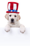 Patriotic Dog Sign. Patriotic Labrador puppy dog holding sign or banner stock photo