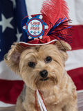 Patriotic Dog Wearing Red White and Blue Top Hat. Patriotic Dog wearing red, white and blue top hat with button that says Land of the Free. Flag background. July royalty free stock photography