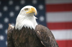 Free Patriotic Eagle Royalty Free Stock Photo - 39086135