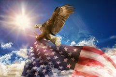 Patriotic eagle taking wing with of US flag