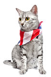 Patriotic Egyptian Mau Cat. A cute Egyptian Mau breed cat with a US flag patterned bandanna tied around her neck.   White Background Stock Image