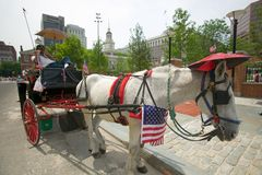 Patriotic horse Stock Photos