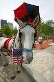 Patriotic horse and carriage with flags in front of Independence Hall, Philadelphia, Pennsylvania Royalty Free Stock Images