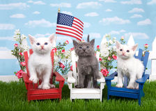 Patriotic kittens in a backyard setting. Three kittens sitting in wood chairs, red white and blue on green grass, white picket fence background with flowers, sky royalty free stock photos