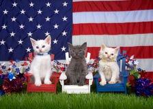 Patriotic kittens three Royalty Free Stock Image