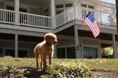 Patriotic Pup Stock Photos