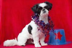 Patriotic puppy. Stock Image