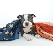 Patriotic puppy Stock Images