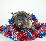 Patriotic Puppy Stock Image