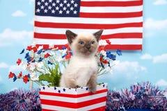 Patriotic siamese kitten Stock Images
