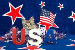 Patriotic tabby kitten. Blue background with red stars outlined in white, kitten sitting in white box with blue stars and tinsel with red white blue U.S.A stock photography