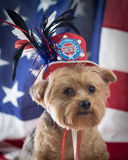 Patriotic Yorkie Dog in top hat in memory of September 11. Yorkie wearing a red, white and blue hat in memory of September 11, with a flag background. Vertical royalty free stock photos