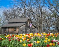 Patriotische Steppdecken-Scheune mit den blühenden Tulpen - Beloit, WI lizenzfreies stockfoto