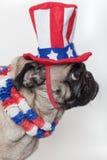 Patriotischer amerikanischer Pughund Stockfotos