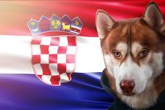 Patriotischer Hund stolz vor Kroatien-Flagge Porträtsibirischer husky im Sweatshirt in den Strahlen des hellen Sonnenscheins vektor abbildung