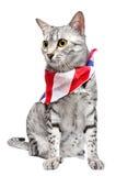 patriotisk egyptisk mau för katt Fotografering för Bildbyråer
