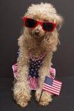 patriotisk poodle Royaltyfria Foton