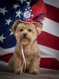 Patriotisk Yorkie hund med hatten och flaggabakgrund, röd vit och blått royaltyfri bild