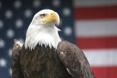 Patriotiska Eagle Royaltyfri Foto