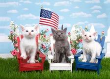 Patriotiska kattungar i en trädgårdinställning Royaltyfria Foton